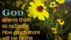 Matthew 6 30