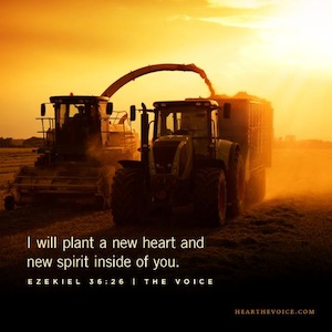 i will plant a new heart