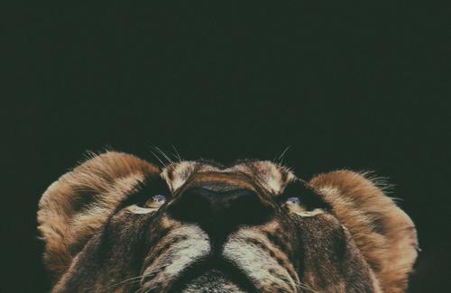 Run Toward the Fear: Run Toward the Roar - FaithGateway