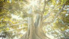 Building on Weak Things | Everyday Holy by Melanie Shankle