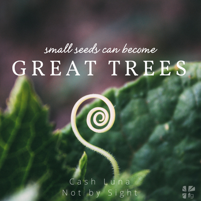 Small seeds become big trees