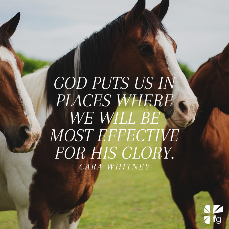Foals with Potential | Unbridled Faith by Cara Whitney